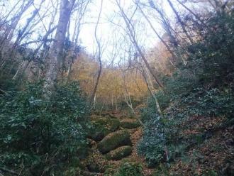 落葉した登山道