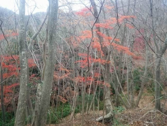 紅葉がの折る登山道