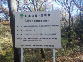 小川ブナ植物群落保護林の看板
