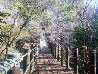 葉が落ちていた「汐見滝」