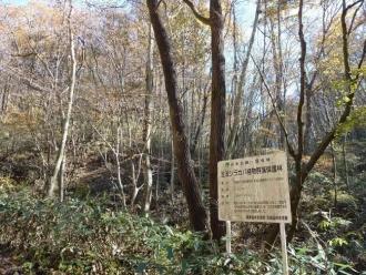 ブナ林の黄葉