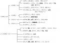 ポリフェノール分類2