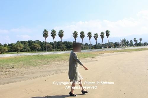kosumosu-1017-1098a.jpg