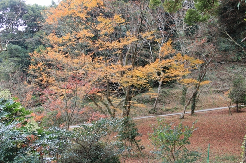 kouyou-1204-3280.jpg