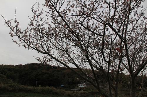 kouyou-1204-3291.jpg