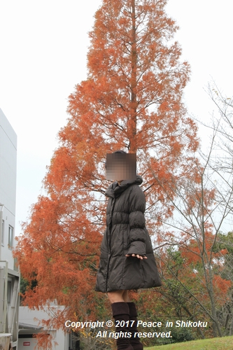 kouyou-1204-3483.jpg