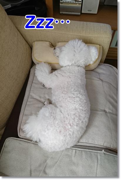 枕して昼寝2