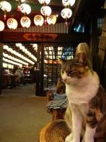 山賊の看板猫