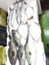 2鮮魚セット20161230