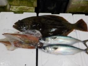 6鮮魚セット20161230