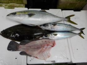 9鮮魚セット20161230