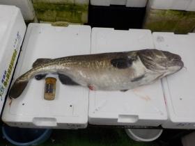 12鮮魚セット20161230