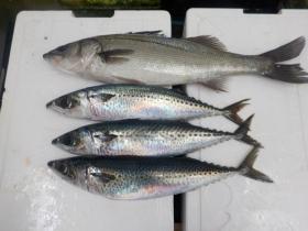 16鮮魚セット20161230
