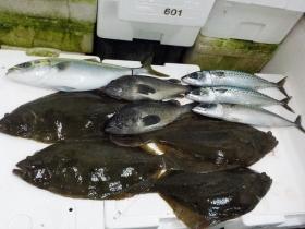 22鮮魚セット20161230