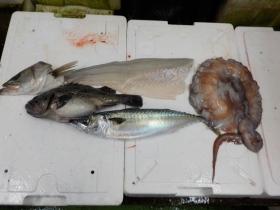 23鮮魚セット20161230