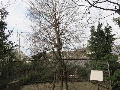 IMG_3675 安居神社