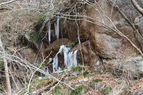 獅子滝付近の氷柱 (1)