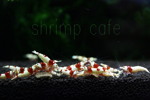 shrimp cafe_0032