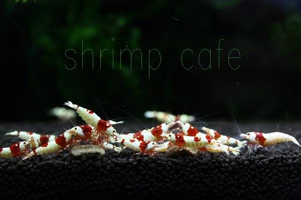 shrimp cafe_0032