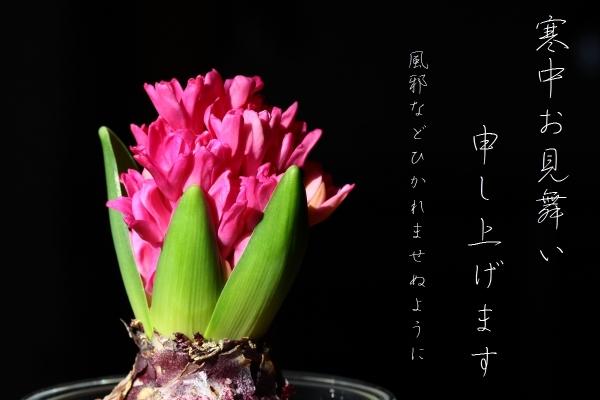 shrimp cafe_0060