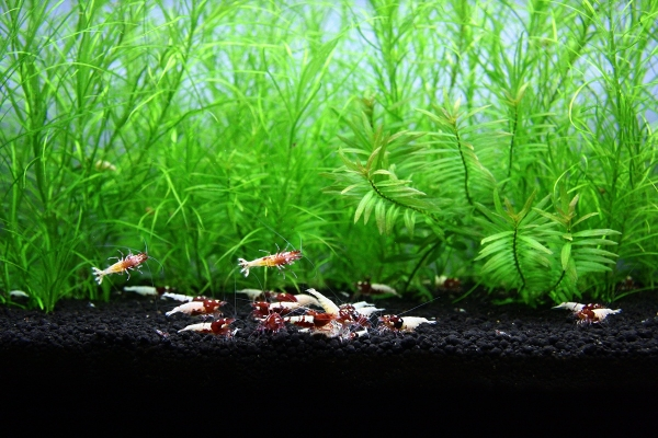 shrimp cafe_0094