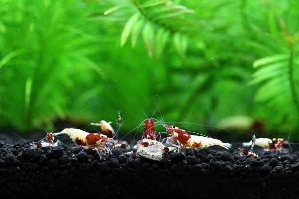 shrimp cafe_0097