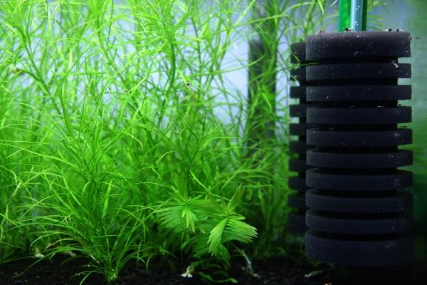 shrimp cafe_0109