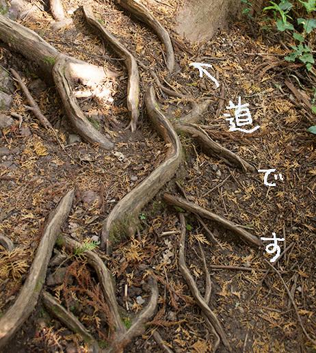 木の根の道2IMG_3254