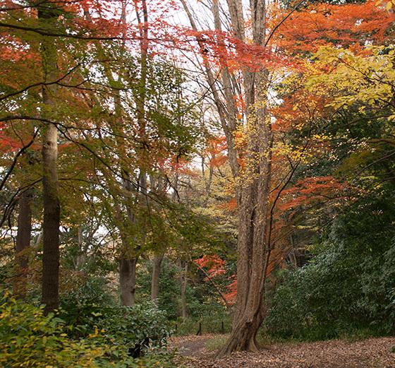 三色の森IMG_4742