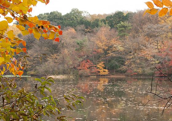 三色の池IMG_4671