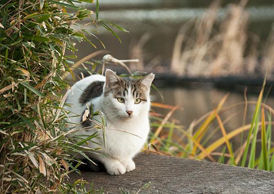 猫IMG_5548