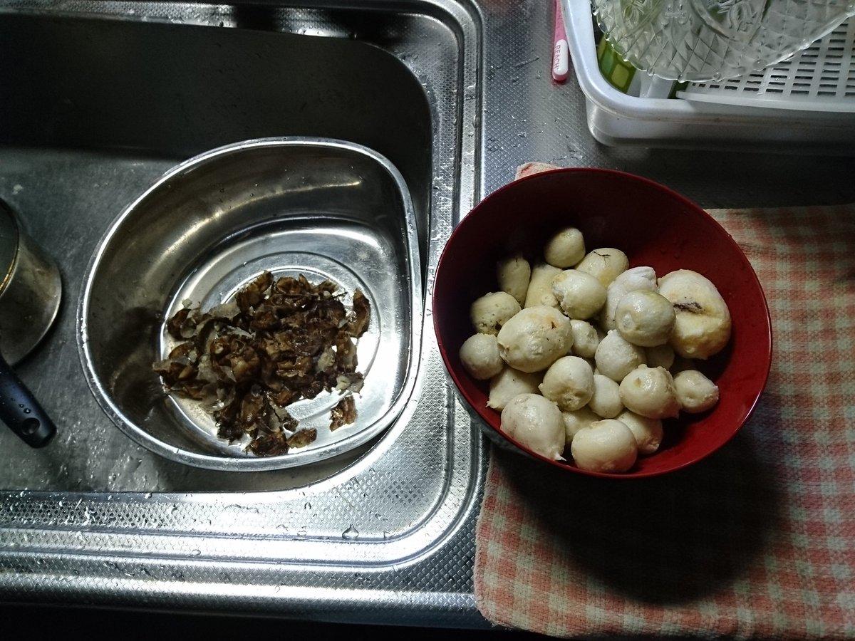 サトイモ(3)