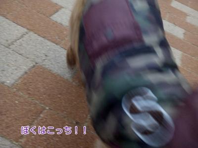 17-02-06-08-38-32-910_deco.jpg