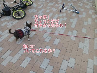 17-02-09-17-09-22-868_deco.jpg