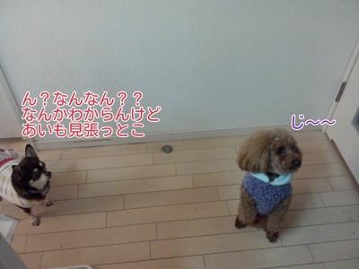 17-02-11-04-33-05-600_deco.jpg