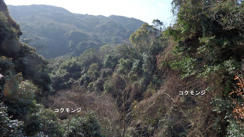自然度8の自然林に近い二次林