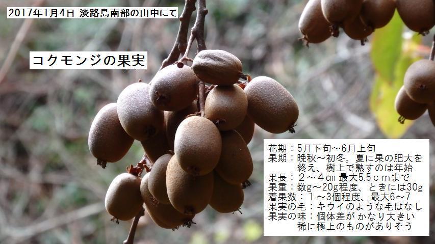 コクモンジの果実