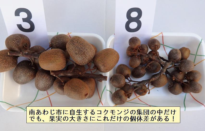 樹によって果実の大きさや味に違いがある