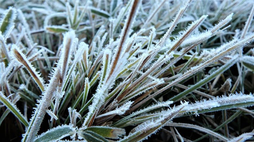 霜が降りたわ!