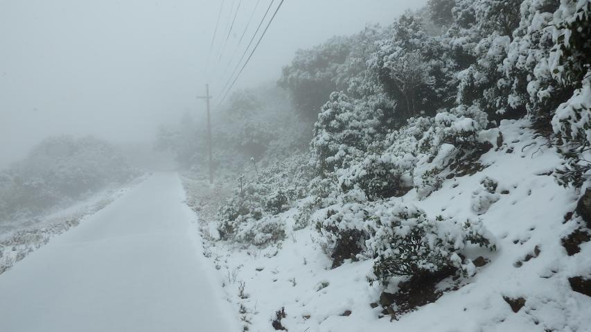 山頂へ至る林道(車道)