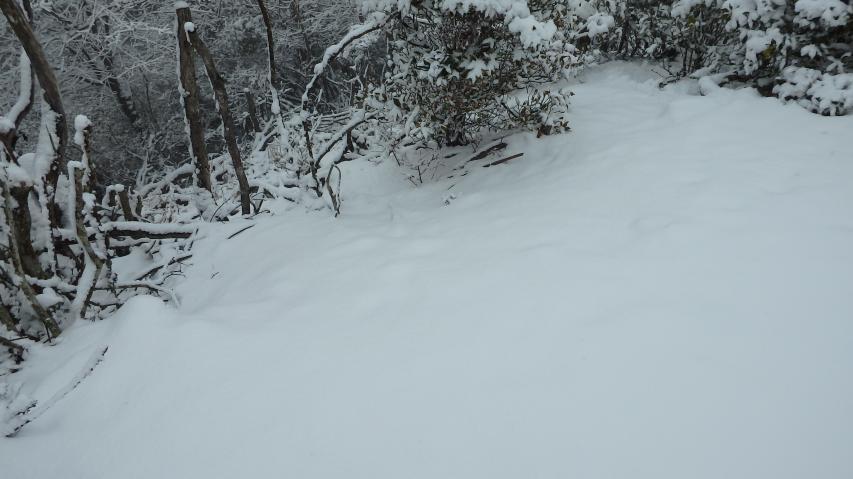 積雪は少ないけど、地面には白無垢のじゅうたん