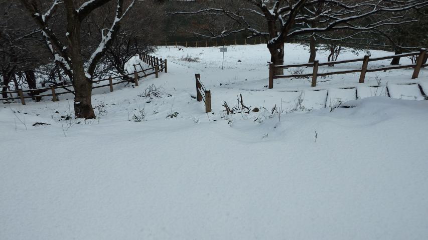 公園散策路一帯も白無垢のじゅうたん
