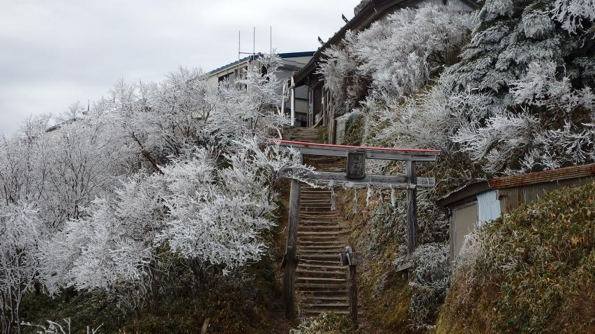 ヒュッテ前のダケカンバにも霧氷