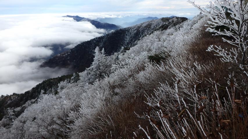 2016年11月10日、剣山の霧氷