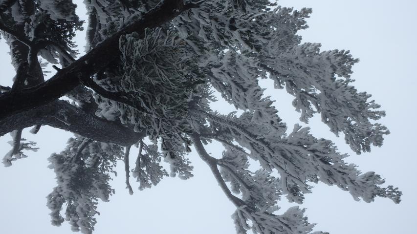 霧氷もあった