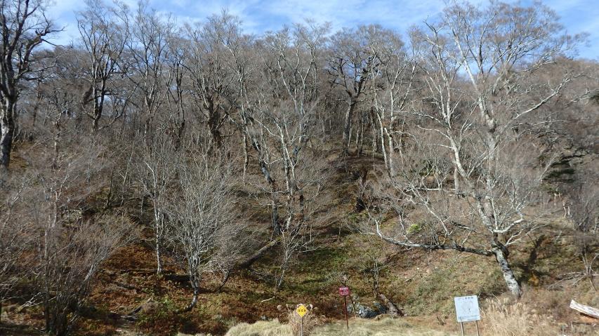冬枯れたブナ林