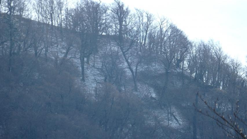 積雪があるように見える