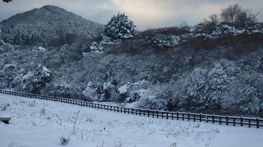 冬のオンツツジ群落