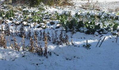 積雪の朝 (2)
