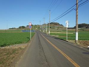 ミドリの丘